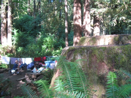August 18, 2011 Redwoods and Tidal Pool, CA