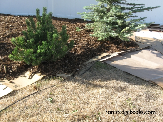 grass cardboard mulch