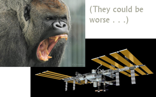 gorillas-and-iss